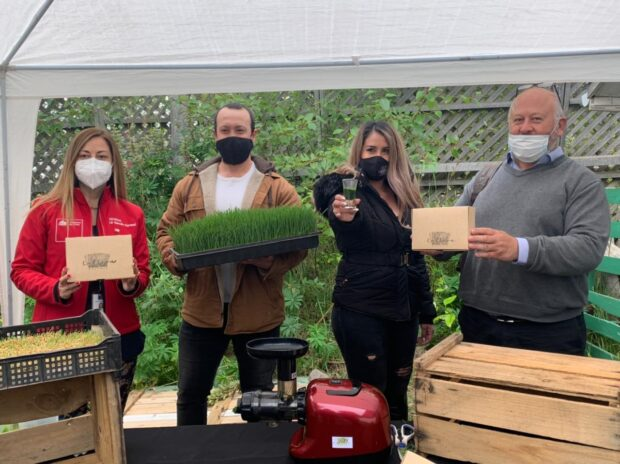 Con el apoyo de Corfo, Cultiva Austral es pionero en el cultivo y elaboración de hierba de trigo en Magallanes