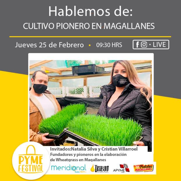 PymeFestival: Cultivo Pionero en Magallanes